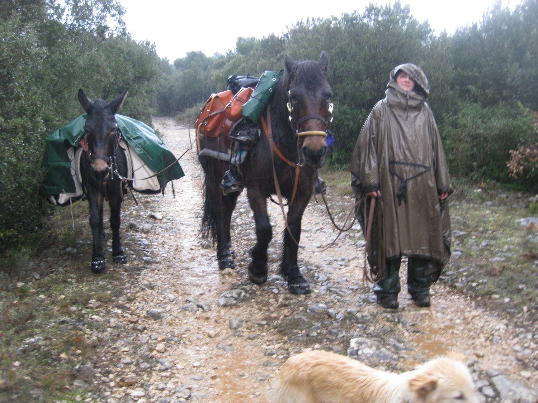 http://www.corambe.com/caminarello/SOL84.JPG