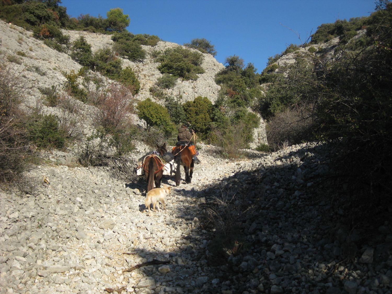 http://www.corambe.com/caminarello/SOL86.JPG