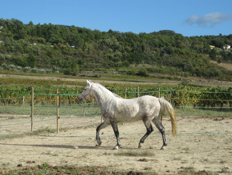 http://www.corambe.com/caminarello/regain2.jpg