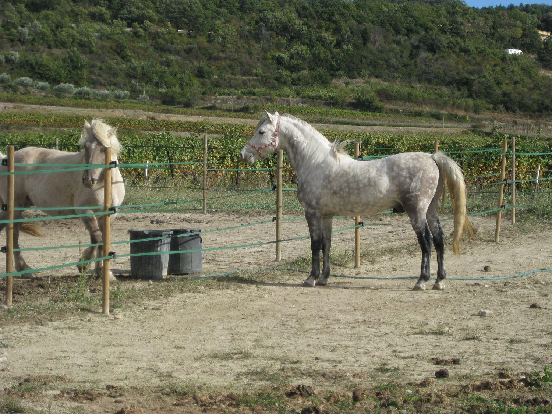 http://www.corambe.com/caminarello/regain4.jpg